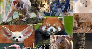 بانمک ترین حیوانات جهان